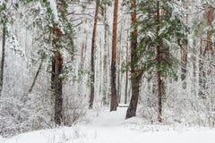 Лес зимы во время сильного снегопада Стоковое Изображение
