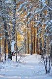 Лес зимы в заходе солнца Стоковые Изображения RF