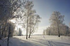 Лес зимы в морозном ясном солнечном дне Стоковое Изображение RF
