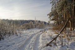 Лес зимы в области Москвы Стоковое Изображение