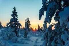 Лес зимы в северной Финляндии Стоковая Фотография RF
