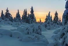Лес зимы в северной Финляндии Стоковое Фото