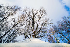 Лес зимы в снеге стоковое фото rf