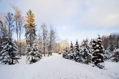 Лес зимы в снеге стоковая фотография rf