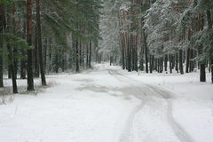 Лес зимы в снеге Стоковые Изображения