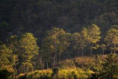 Лес зимы в Таиланде Стоковая Фотография