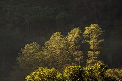 Лес зимы в Таиланде Стоковое Изображение RF