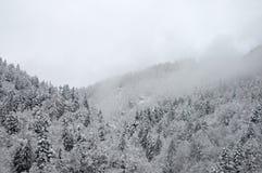 Лес зимы в тумане Стоковое Изображение