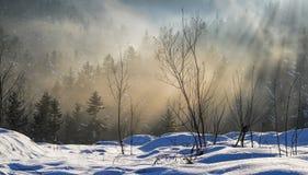 Лес зимы в тумане Стоковое Изображение RF