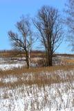 Лес зимы, дерево, снег, ландшафт, сельская местность Стоковая Фотография RF