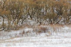 Лес зимы, дерево, снег, ландшафт, сельская местность Стоковые Фото