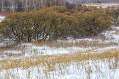 Лес зимы, дерево, снег, ландшафт, сельская местность Стоковые Изображения RF