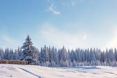 Лес зимы и часть загородки Стоковая Фотография RF