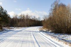 Лес зимы, конец-вверх Стоковое фото RF