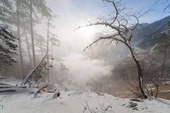 Лес зимы красивый Стоковое Фото