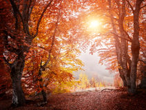 Лес зимы красивый Стоковая Фотография