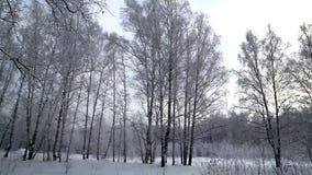 Лес зимы на заходе солнца Новосибирска в месяце декабря 2018 сток-видео