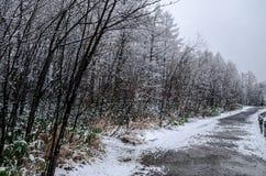 Лес зимы на пруде сини Biei Стоковое Изображение