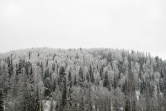 Лес зимы на холме стоковое фото rf