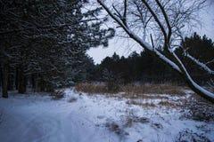 лес зимы после снежностей стоковая фотография