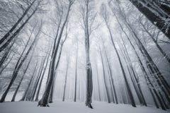 Лес зимы, природа зимы Стоковые Изображения RF