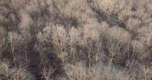 Лес зимы сверху сток-видео