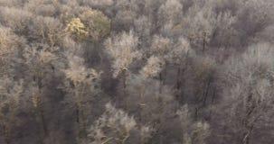 Лес зимы сверху видеоматериал