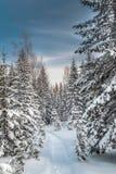 Лес зимы снежный под голубым небом Стоковое Фото