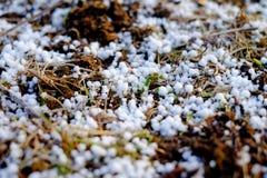 Лес зимы, сосна Стоковая Фотография RF