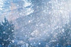 Лес зимы со снегом и изморозь на деревьях стоковое изображение rf