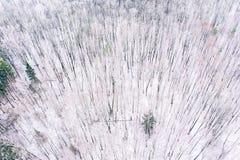 Лес зимы с лиственными деревьями зимы покрытыми со снегом фото снежного ландшафта воздушное стоковое изображение rf