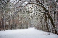 Лес зимы с путем стоковое изображение rf