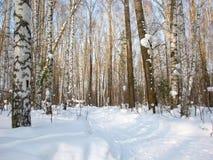 Лес зимы Стоковое Изображение RF