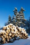 Лес зимы стоковая фотография rf