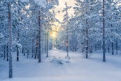 Лес зимы Стоковая Фотография