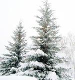 Лес зимы Стоковое фото RF