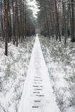 Лес зимы Стоковые Фото