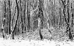 Лес зимы Narnian Стоковые Фотографии RF