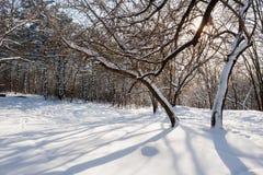 Лес зимы Snowy Стоковые Изображения