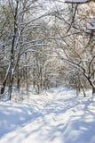 Лес зимы Snowy Стоковое Фото