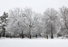 Лес зимы Snowy Стоковое фото RF