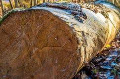 Лес имени пользователя Стоковые Фото