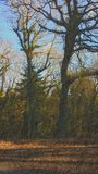 Лес Ирландия Стоковое Изображение