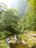 Лес дисплея растительности при меньший поток пропуская до конца Стоковое фото RF