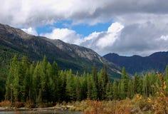 Лес лиственницы на береге реки горы Стоковые Изображения
