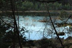 Лес и вода Стоковое Фото