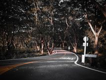 Лес и дорога стоковая фотография