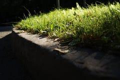 Лес или парк с листьями осени деревьев тонизировали ретро винтажное влияние действия app фильтра instagram Стоковые Изображения RF