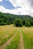 Лес и красивый горный склон scenary Стоковое Изображение