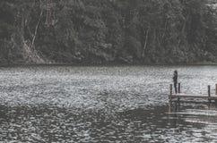 Лес и молодые женщины реки стоковое изображение rf